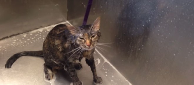 Un chat dit « No more » pendant un bain