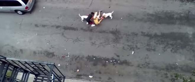 Deux pitbulls hors de contrôle attaquent un homme