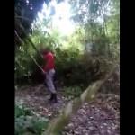 jaguar-chasse