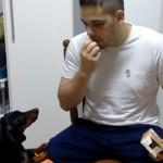 medicament-chien