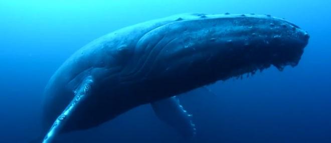 Baleine femelle triste