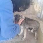 chien-maltraite-caresse