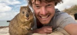 Cet homme maitrise les selfies avec les animaux