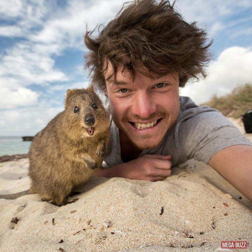 selfie-animaux-1