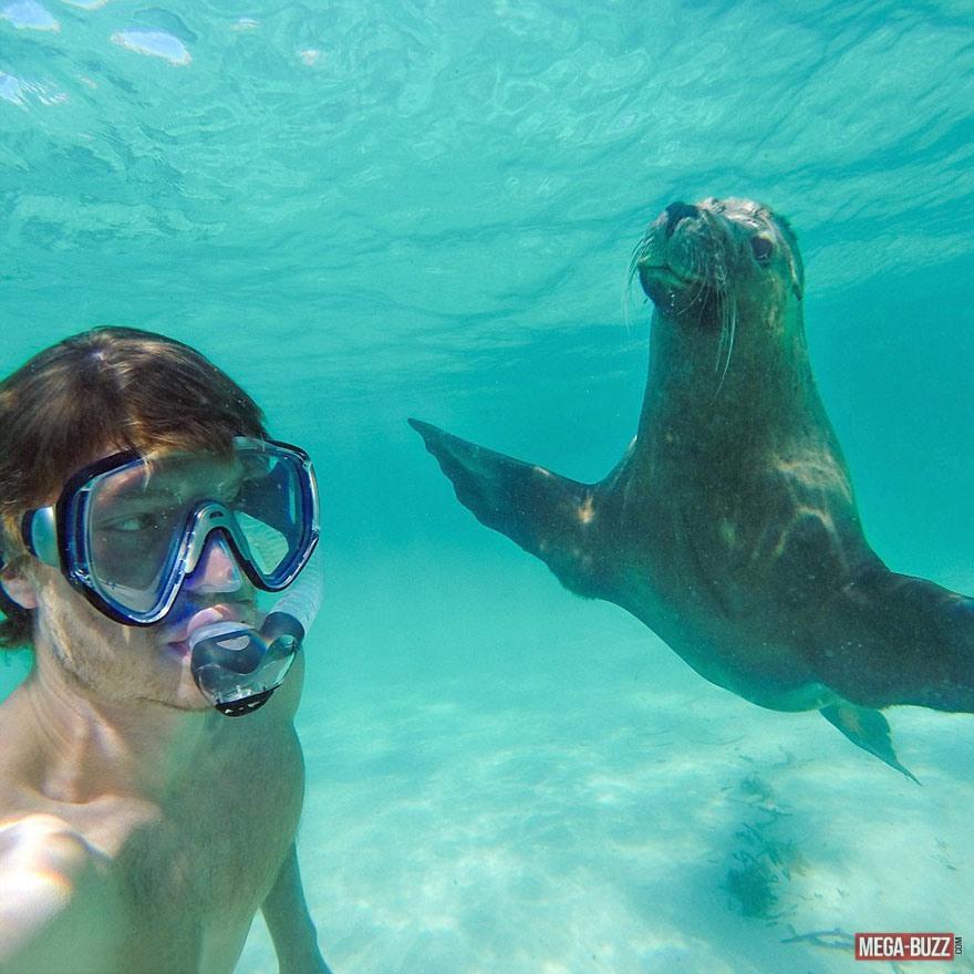 selfie-animaux-10