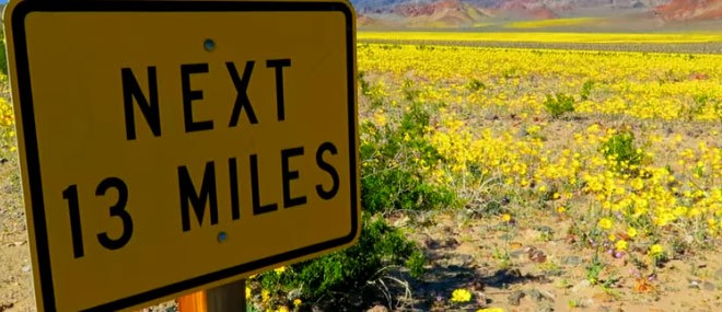 Des fleurs dans la Vallée de la Mort