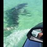 jetski-vs-requin