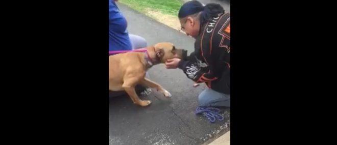 Un homme retrouve son chien après 2 ans de séparation