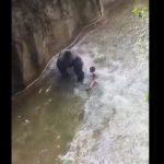 enfant-chute-cage-gorille