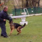 dresseur-maltraite-chien