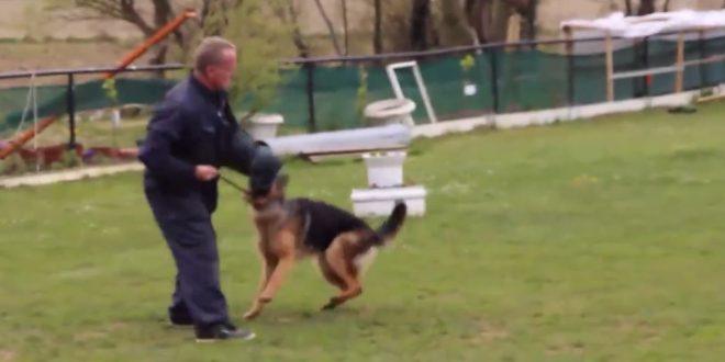 Un dresseur maltraite un chien