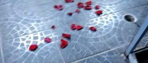 petale-rose