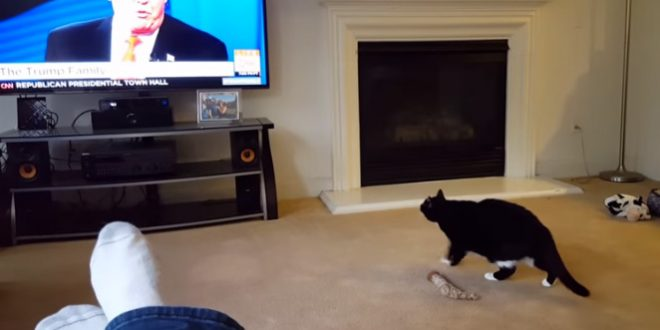 Un chat a peur de Donald Trump