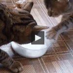 2chats-lait
