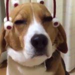 chien-massage-tete