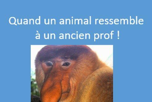 Quand un animal ressemble à un ancien prof !