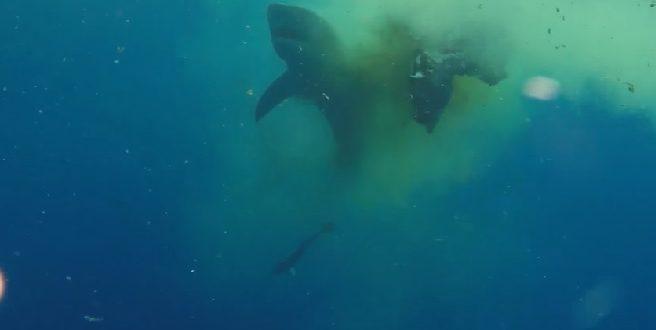 Vidéo : Un requin de mauvaise humeur !