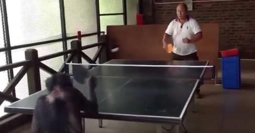 Vidéo :Petite partie de ping-pong avec un collègue original  !