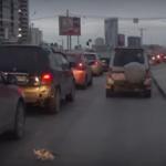 chaton-autoroute