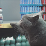 netto-chat