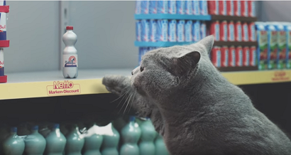 Des chats font leurs courses au supermarché !
