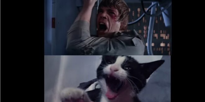 Une parodie animale de Star Wars !
