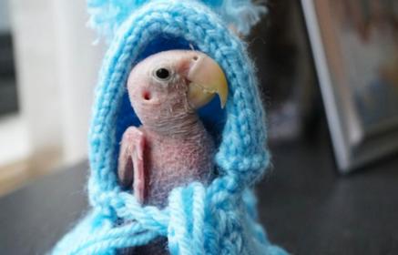 L'histoire de ce petit perroquet a ému le monde entier !