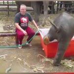 bebe-elephant-mignon