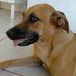 chien-avec-dents-humain-610x342