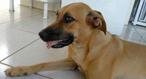 Ce chien enfile un dentier et c'est tout simplement hilarant !
