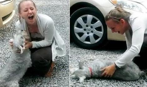 Ce chien est tellement heureux de revoir sa maîtresse qu'il …